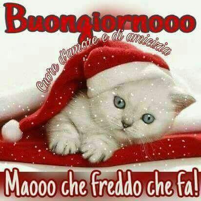 Buongiorno Immagini Whatsapp Gatto Magicobuongiorno It