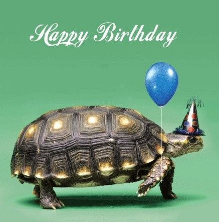 turtle birthday The card I got | Other | Pinterest | Birthday cards, Birthday and  turtle birthday