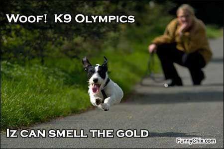 #dog #run