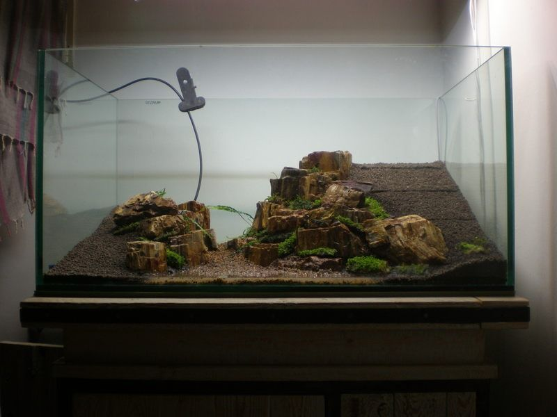 We love to see the evolution of a scape this one is for Fish tank wood