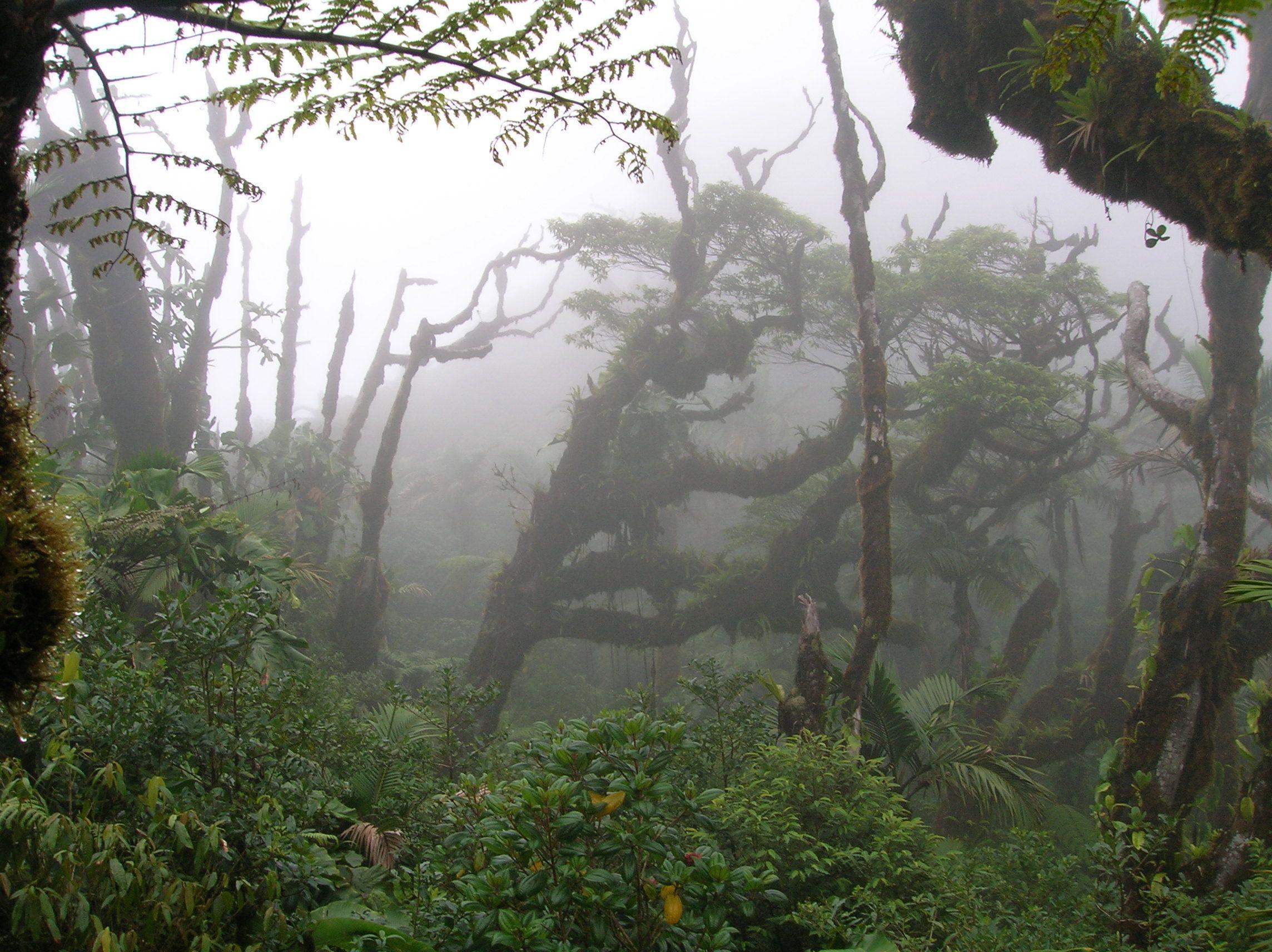 Lush Rain Forest