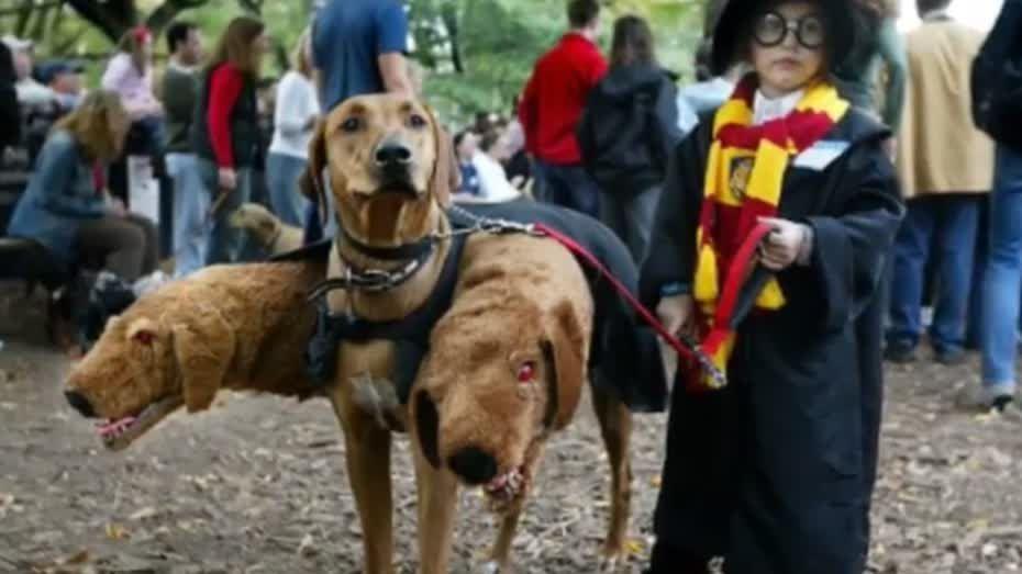 mejores disfraces para perro - Buscar con Google