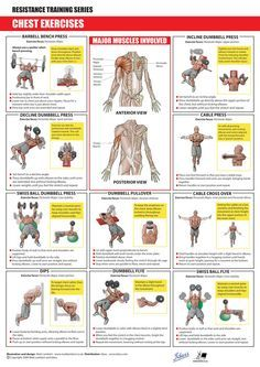 chestexercises  chest workouts exercise workout chart