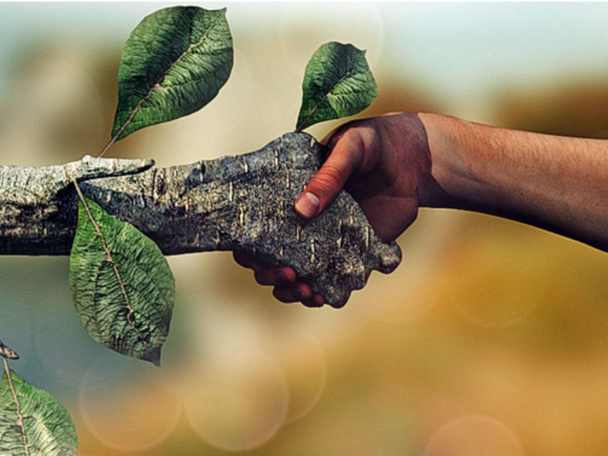 Ecologia Verde Medio Ambiente Frases Conservacion Del Ambiente