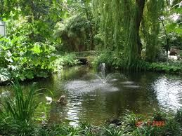 Botanische Tuin Delft : Foto s botanische tuin delft google zoeken flower power