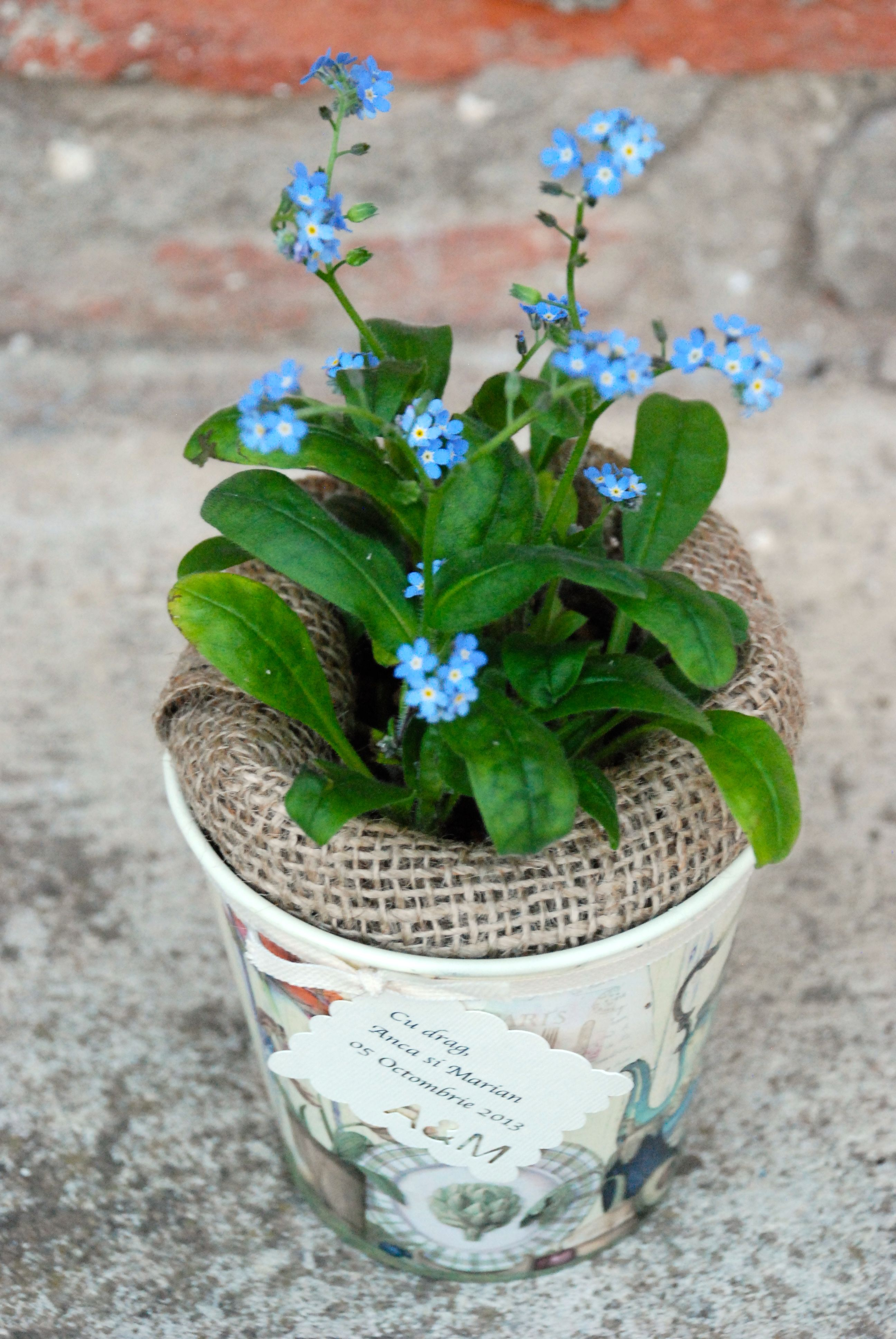 Flower pot gift favor Plant wedding favors, Plants, Tree