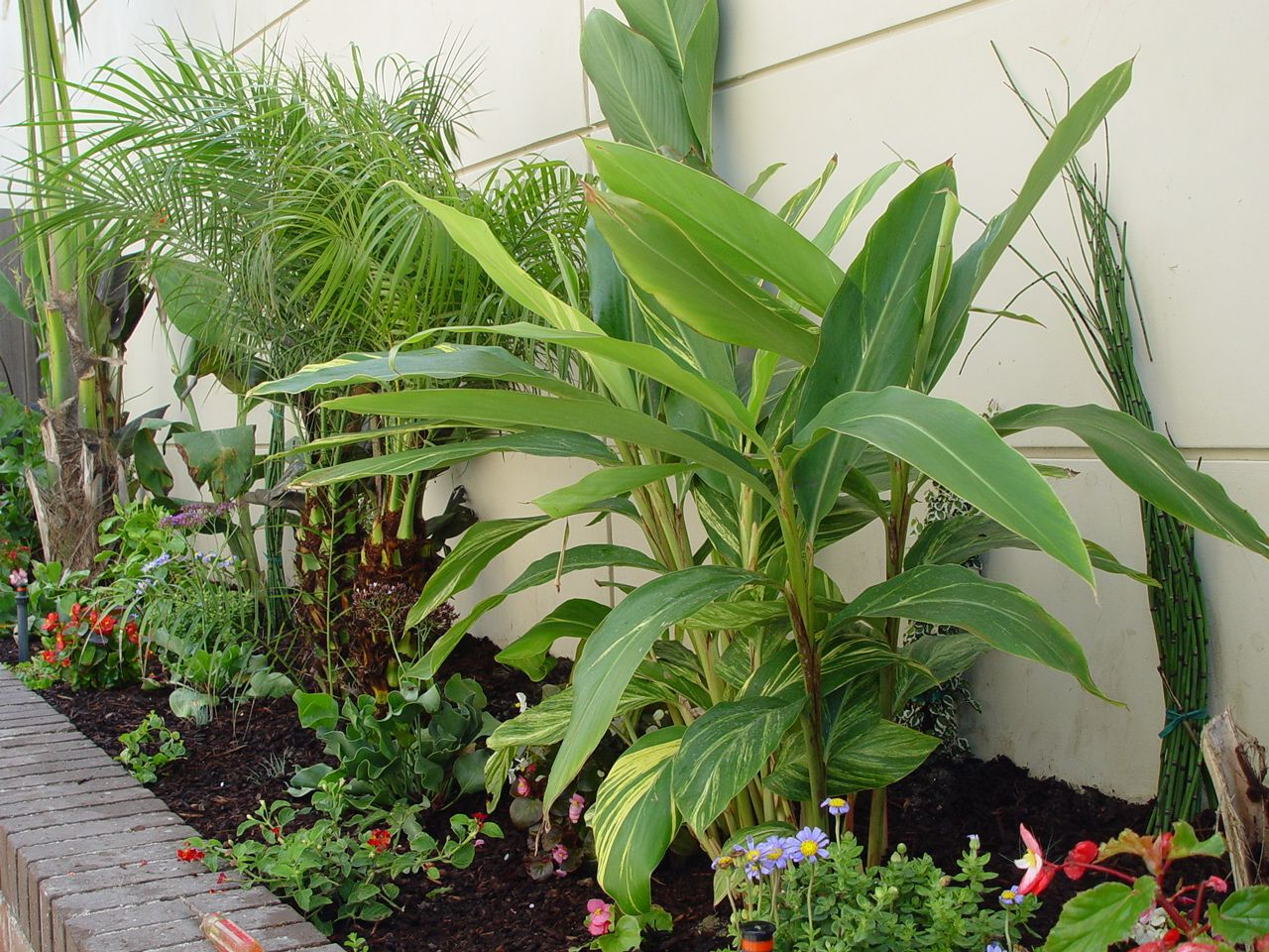 Tropical landscaping pictures tropical plants fill the for Beach house landscaping plants