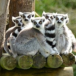 Dublin Tips For Visiting The Dublin Zoo Because Lunching In The Company Of Meerkats Sounds Like A Wonderful Way To Lunch Dublin Zoo Zoo List Of Animals