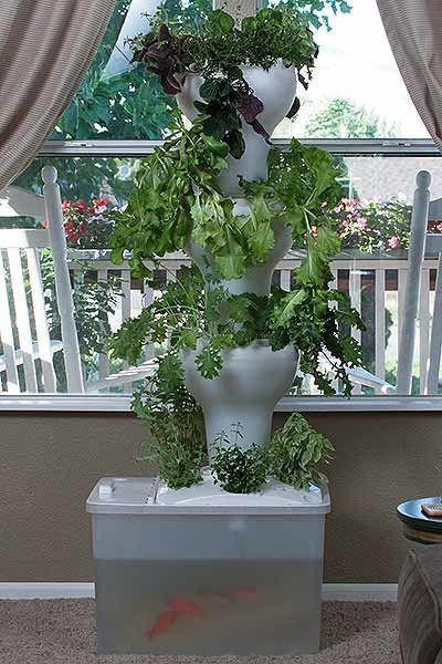 Aquaponics Garden Design find this pin and more on mini aquaponics Aquaponic Vertical Growing System Foody Garden Towers Foody Vertical Gardens