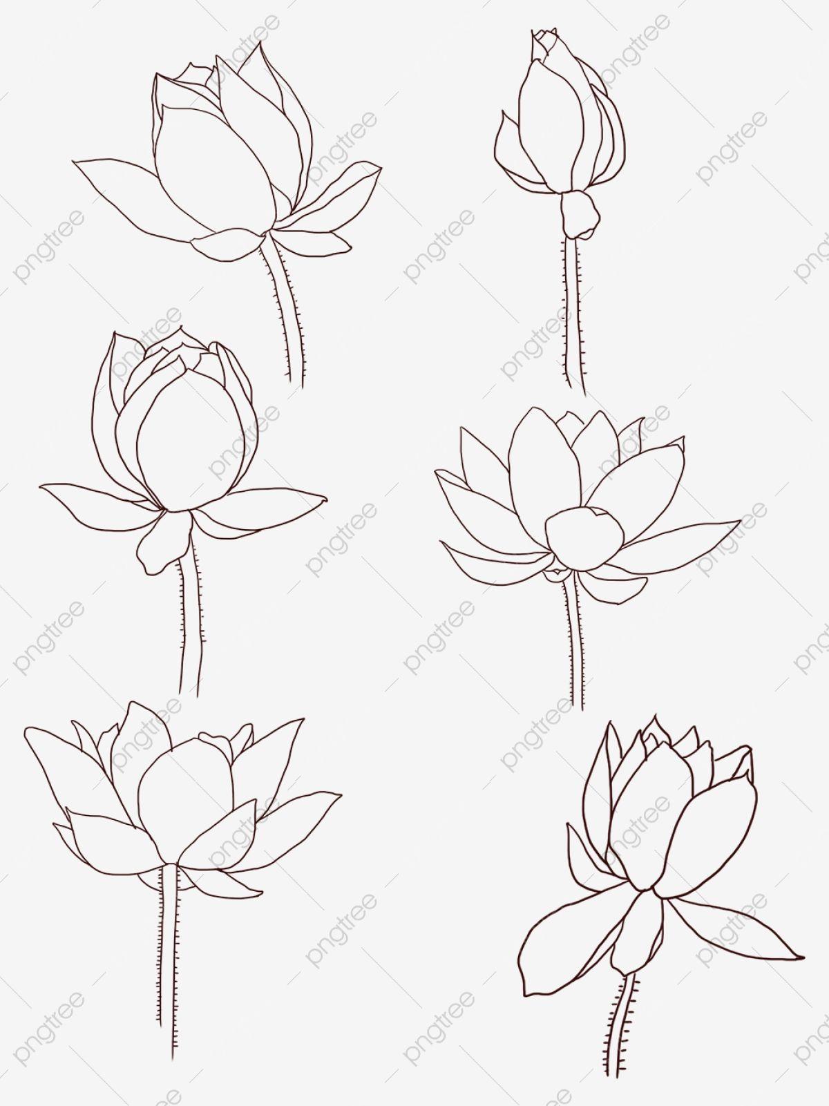 Bunga Lukisan Tangan Bunga Jane Bunga Bunga Garis Mudah Ditarik Fail Png Dan Psd Untuk Muat Turun Percuma Flower Drawing Lotus Drawing Lotus Flower Drawing
