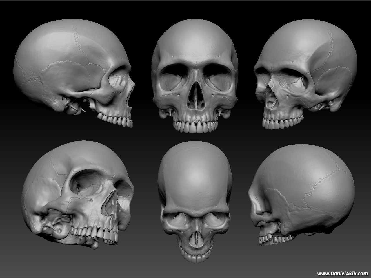 anatomy for artists head - Google Search | 3D Sculpting