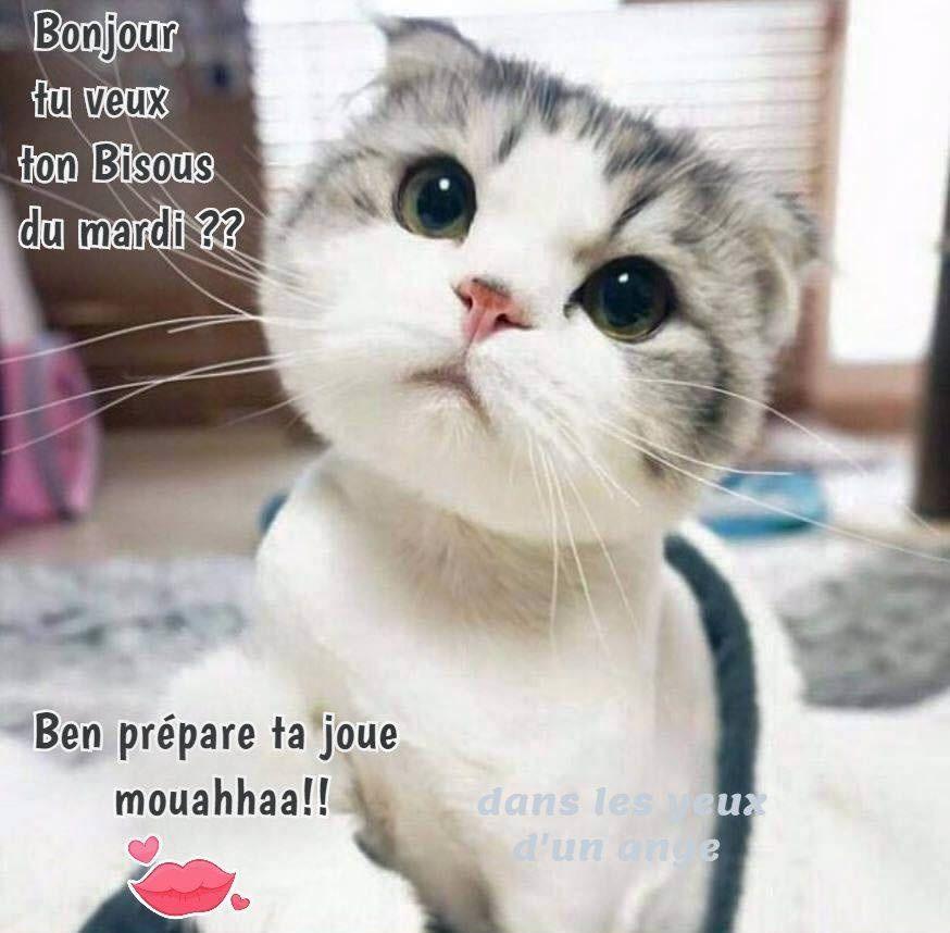 Mardi Image 2 Bisous Bonjour Et Bonne Journee Bon Mardi Humour