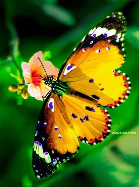 La chasse aux papillons la vie r v e de clara et cie papillon butterfly beautiful - Images de papillon ...