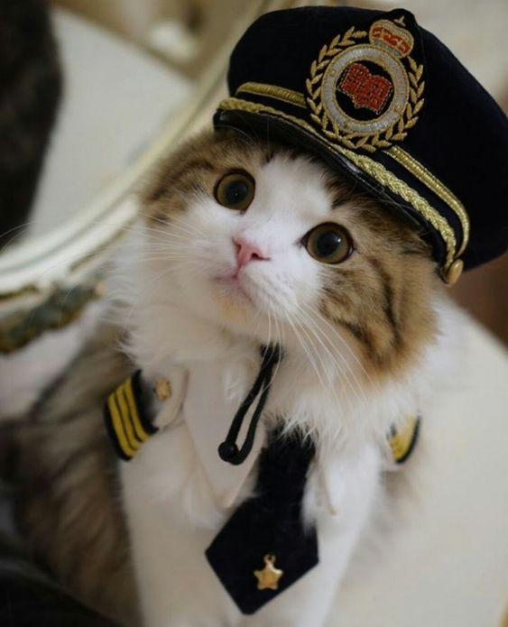 Gatitos tiernos ¡Fotos de mininos de ojos saltones y graciosas ocurrencias!