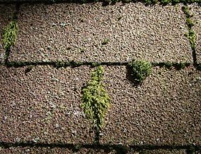 Removing Moss And Algae From Roofs Roof Home Maintenance Diy Home Improvement