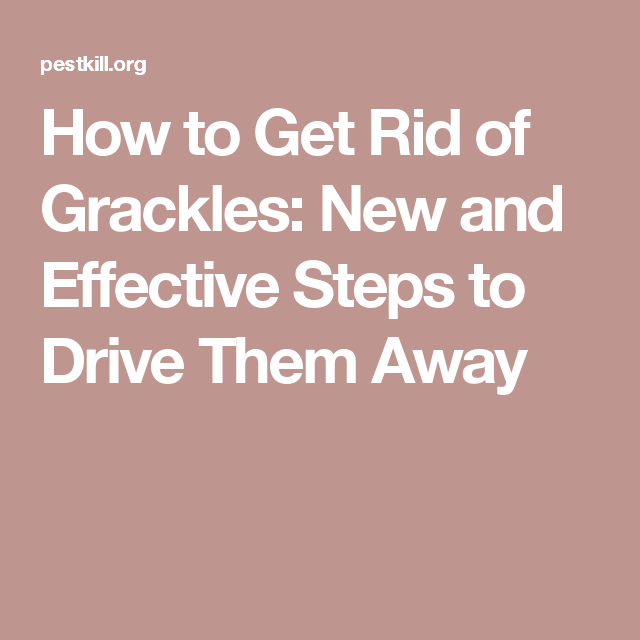 How to Get Rid of Grackles: New and Effective Steps to ...