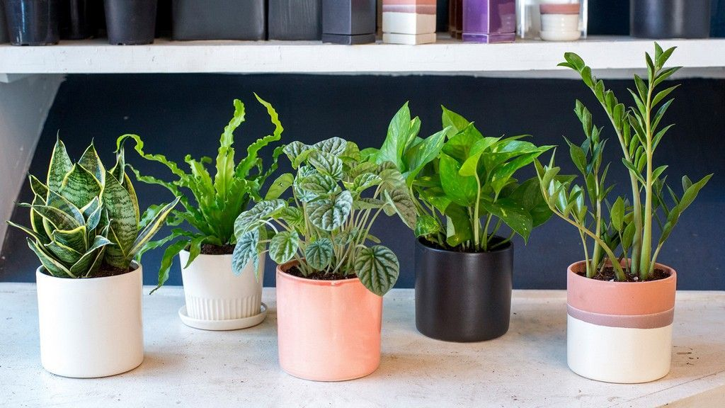 How to Arrange the Indoor Plant for Small Apartments#apartments #arrange #indoor #plant #small