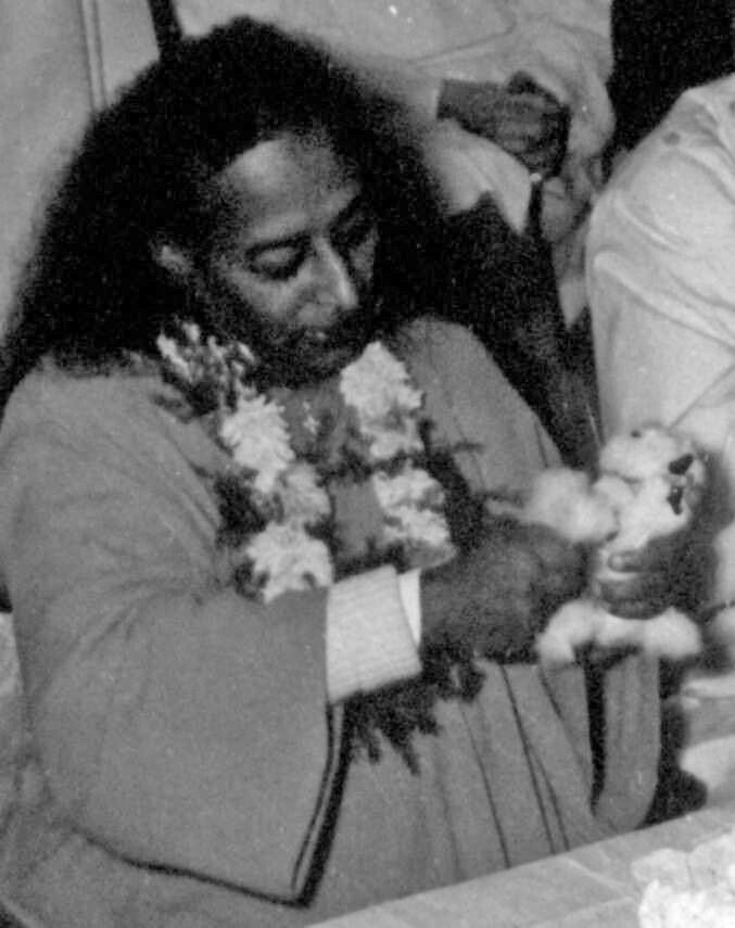 """""""Forgiveness is the might of the mighty; forgiveness is sacrifice; forgiveness is quiet of mind. Forgiveness and gentleness are the qualities of the self-possessed. They represent eternal virtue."""" - Paramhansa #Yogananda"""