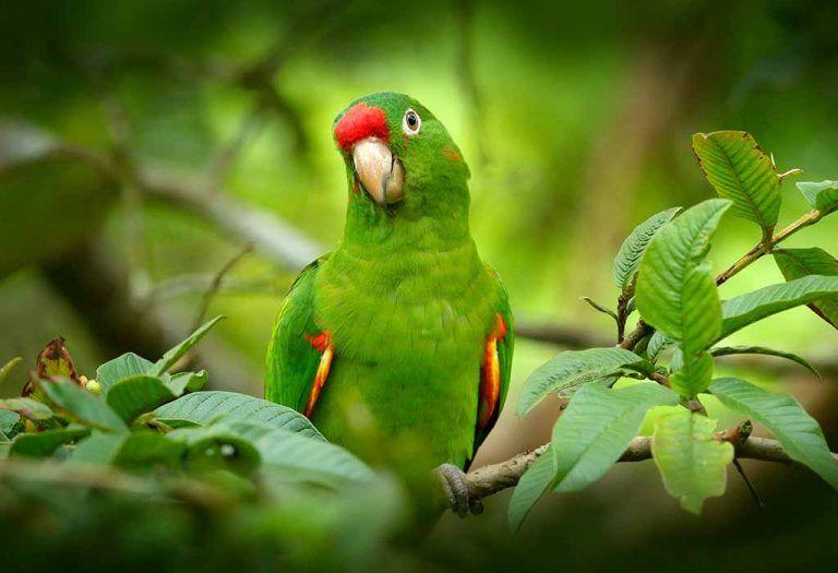 الببغاء من الطيور الأكثر شعبية والمحببة بين الأطفال بصرف النظر عن كونها جميلة مع الريش الملون والمنقار فهي تعتبر واحدة من أكثر ا Parrot Parrot Facts Animals