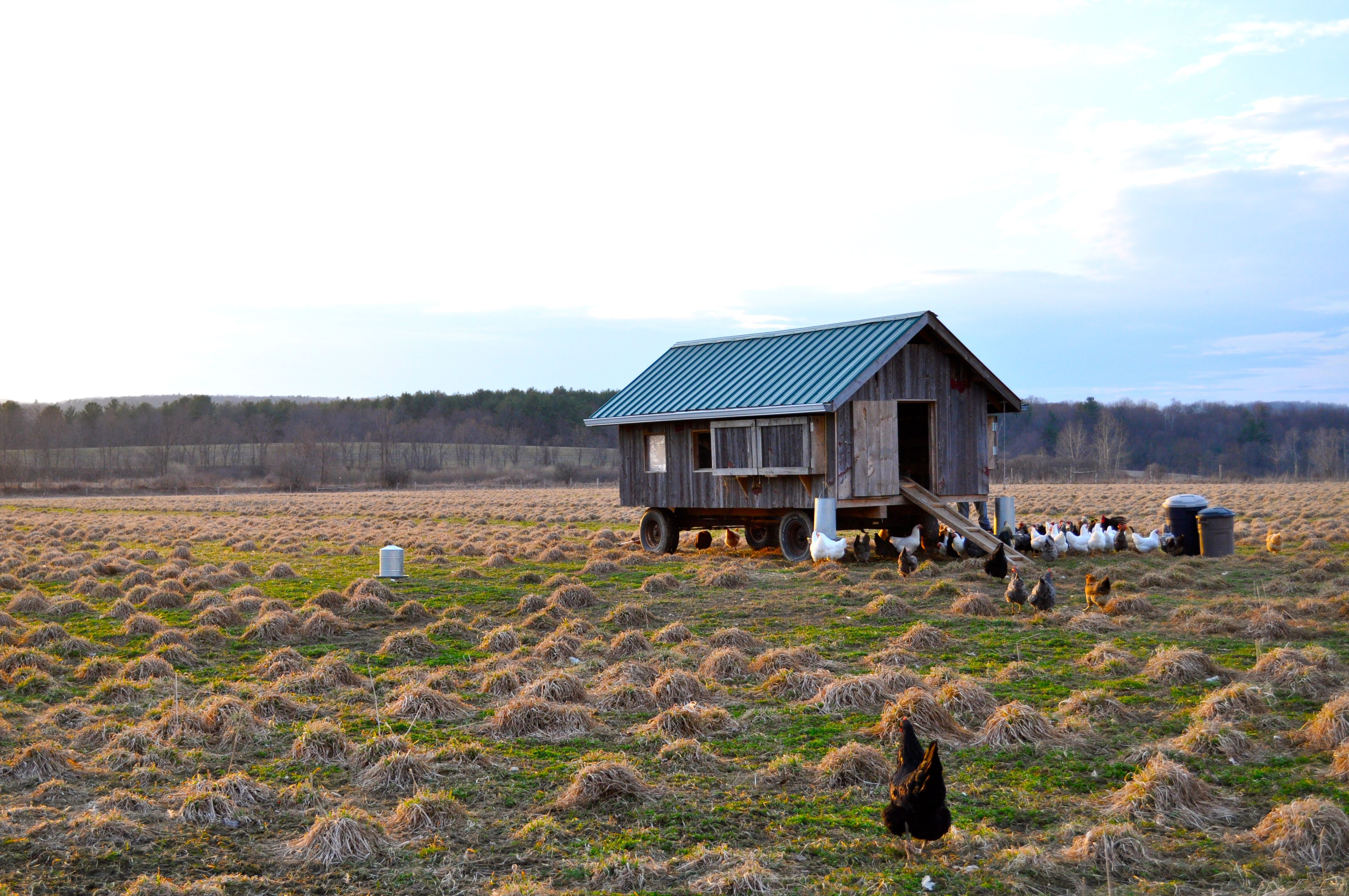 Large chicken coop on wheels  I want to do this! | chickens