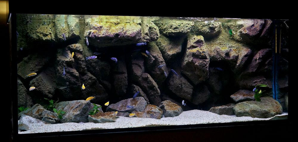 Pin by jep on aquascaping pinterest aquariums for African cichlid tank decoration