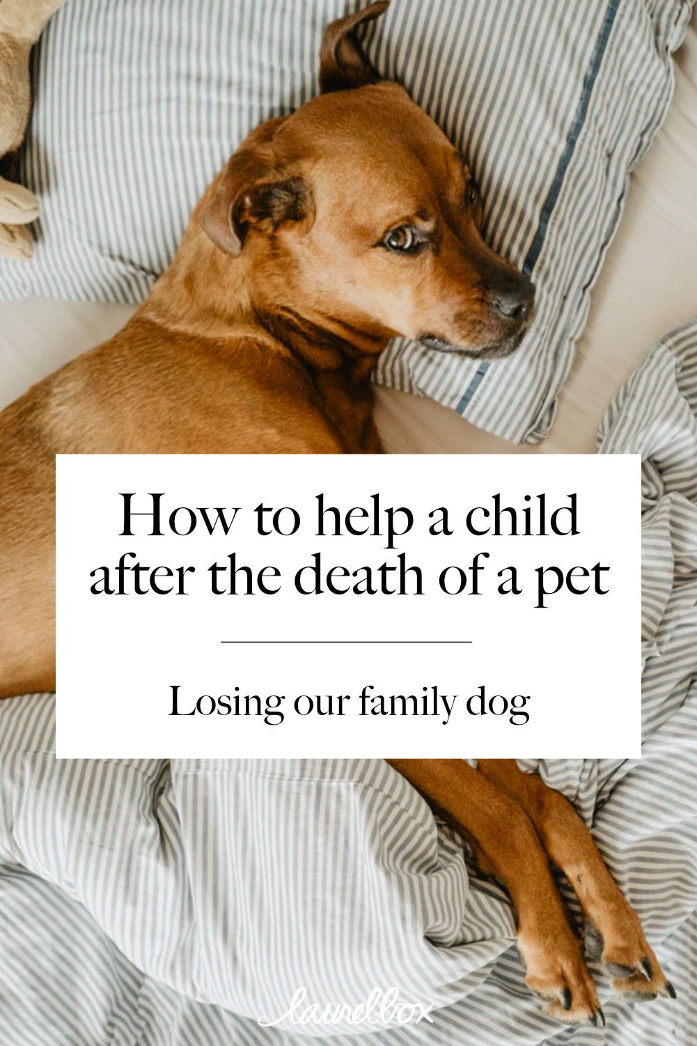 Losing a pet our story in 2020 losing a pet dog died