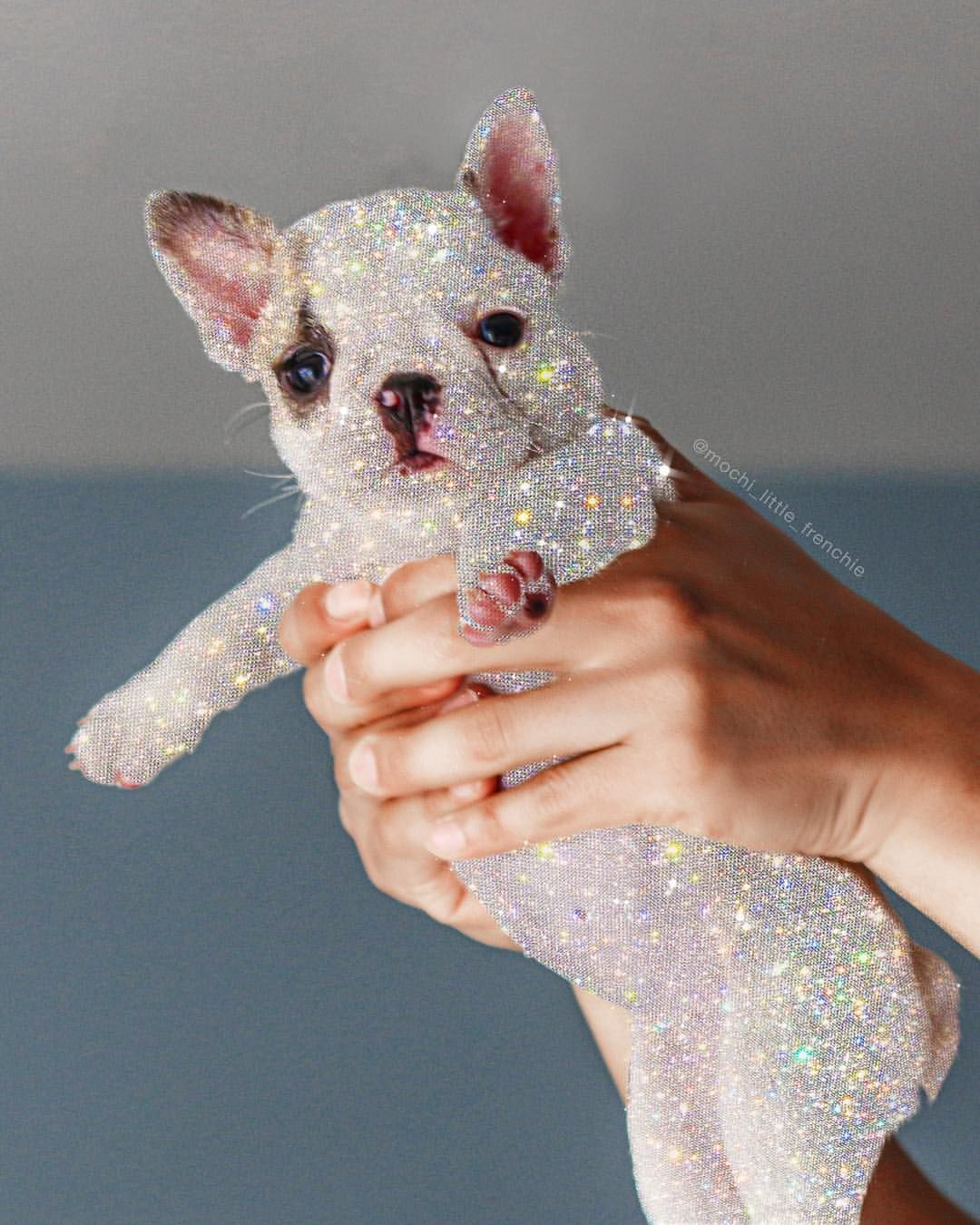 Rise And Sparkle Mochi Little Frenchie Frenchie