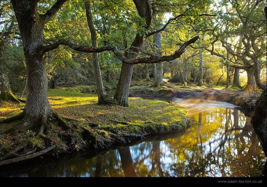 In The New Forest Hampshire England Hampshire England New Forest National Parks