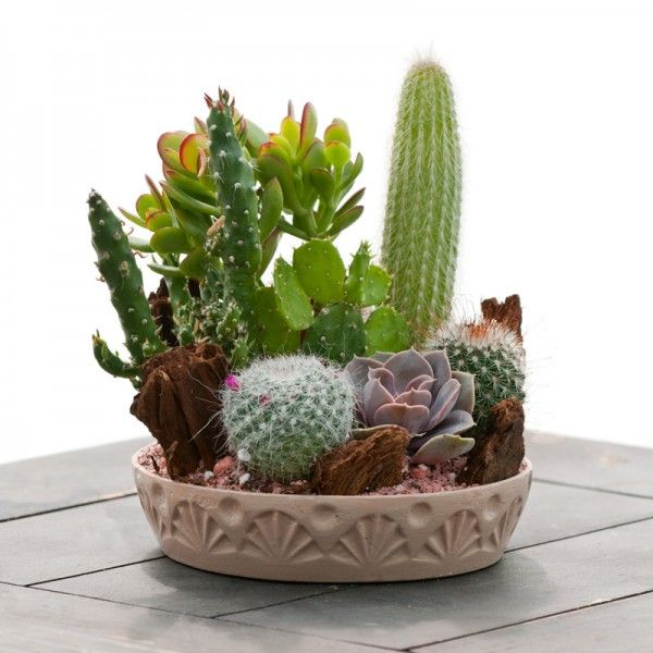 Medium Cactus Garden Indoor Amp Office Plants By Plant