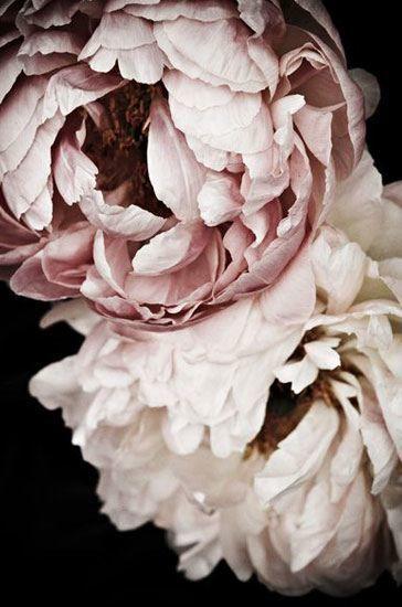 Pin by CHARAKTERSTÜCKE on fowers I blumen | Pinterest | Flowers ...