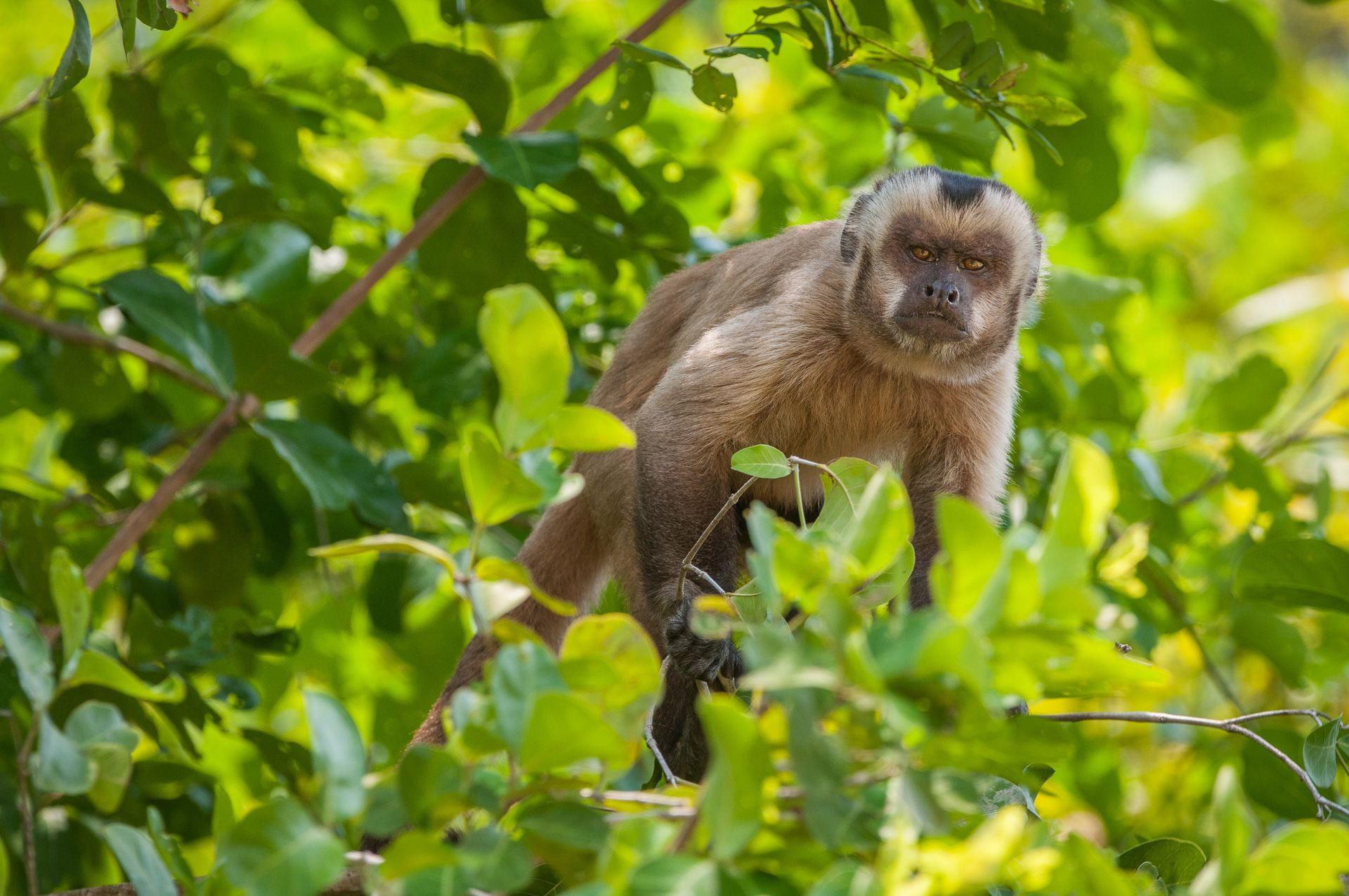Find This Pin And More On Primates