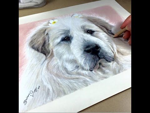 TUTORIAL #3- How to draw White Fur in color pencils