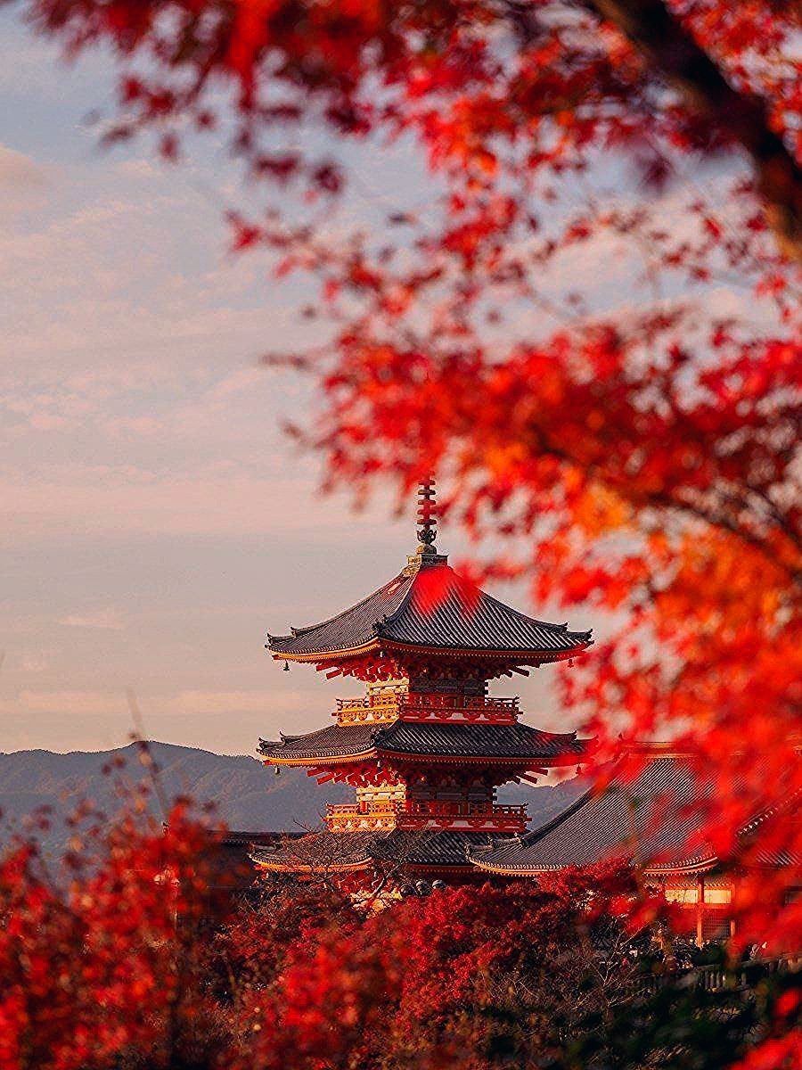Photo of Autumn in Japan – Travel and Photography Tips for Kyoto + Tokyo