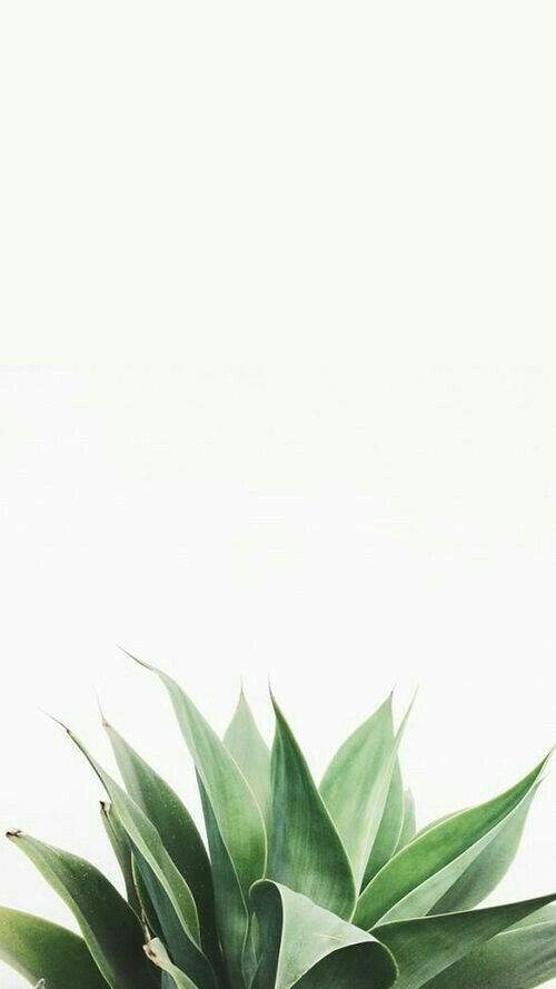 Pin By Kristine Gonzales On Wallpapers Plant Wallpaper White Wallpaper For Iphone Green Wallpaper Phone