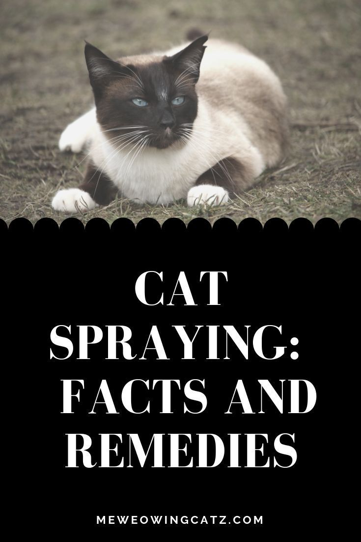 Spraying in cats, What is spraying? Male cat spraying