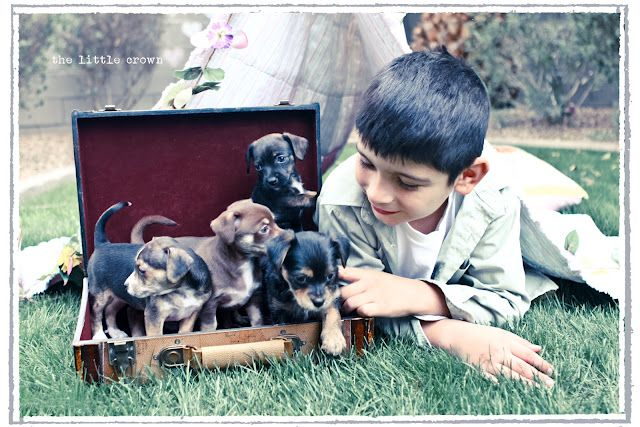 a boy and his puppies