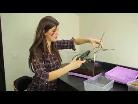How To Build A Praying Mantis Terrarium House Cage Praying Mantis Terrarium Pet Store