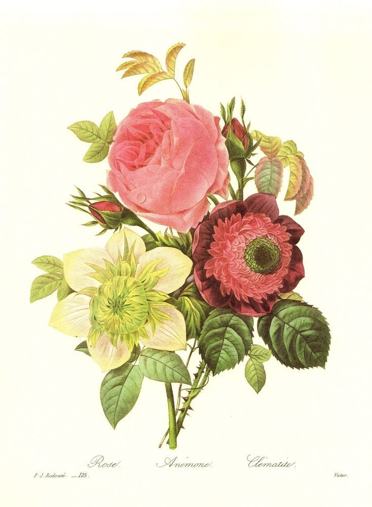 Vintage Redoute Botanical Print Bouquet Country French Home Decor ...