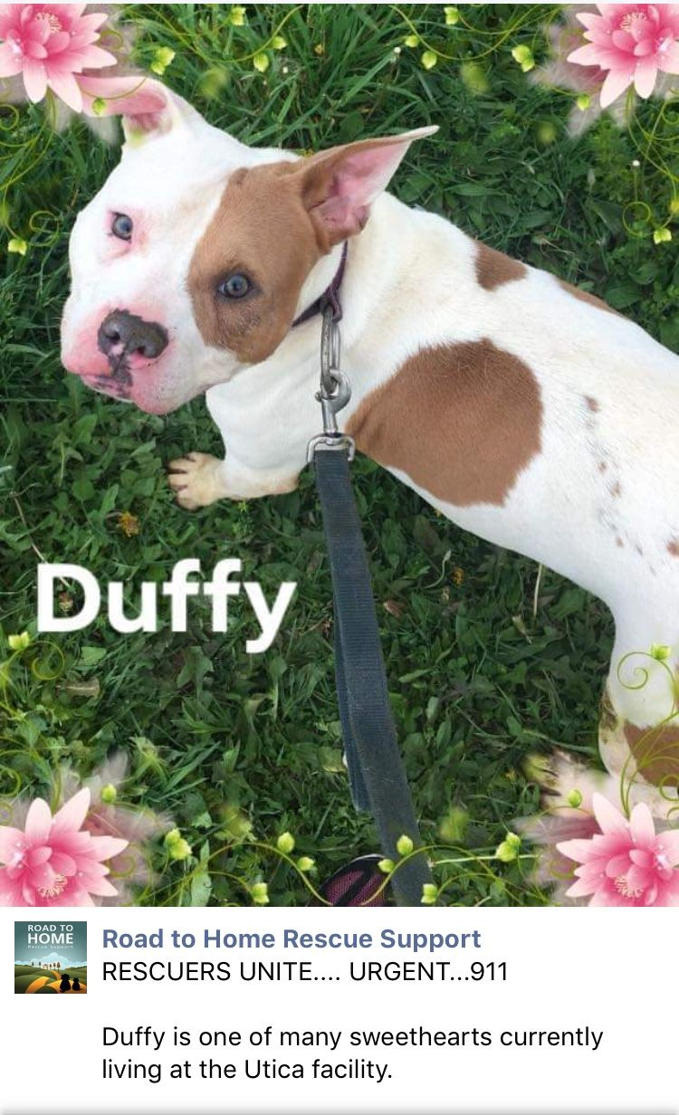 5 25 19 Please Read Duffy Needs Urgent Help Out Of The Utica