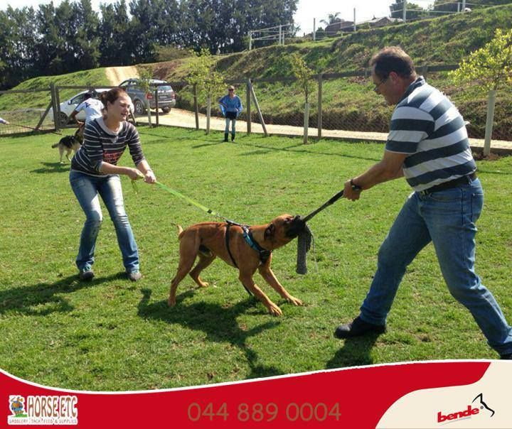 Bendesa Not Only Offers The Best Training Equipment For Your Dog