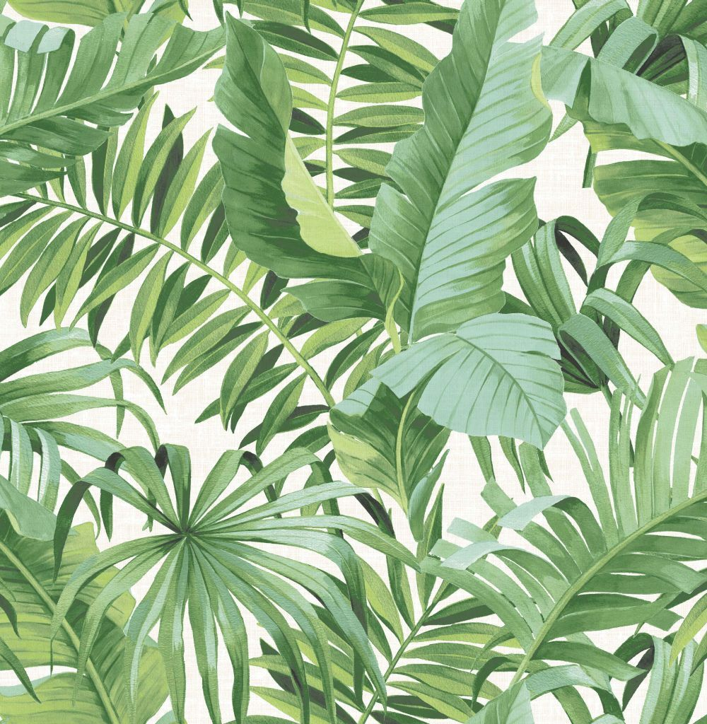 Baja by Albany Green Wallpaper 24136 Palm leaf