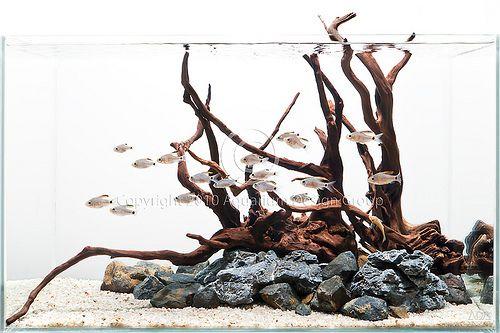 Plantless Aquascapes Aquarium Aquarium Design Aquarium