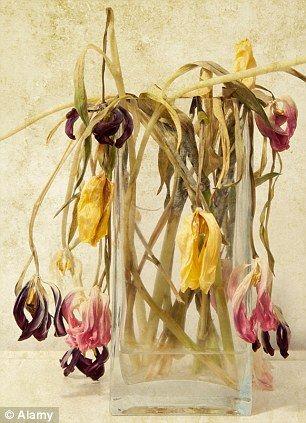 Dead Flowers In A Vase Google Search Twelve Pound Look Flowers