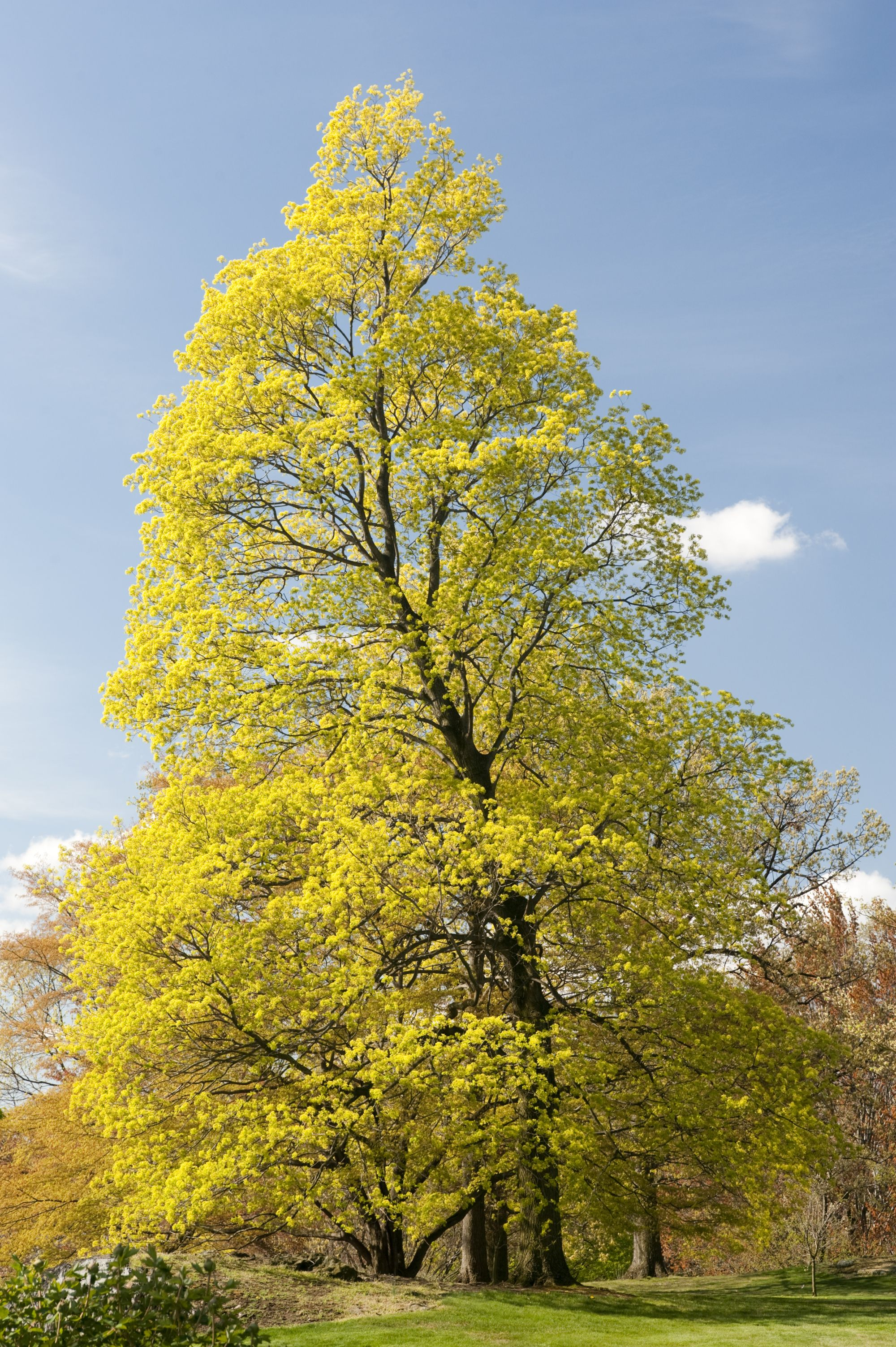 pictures of trees in the spring -