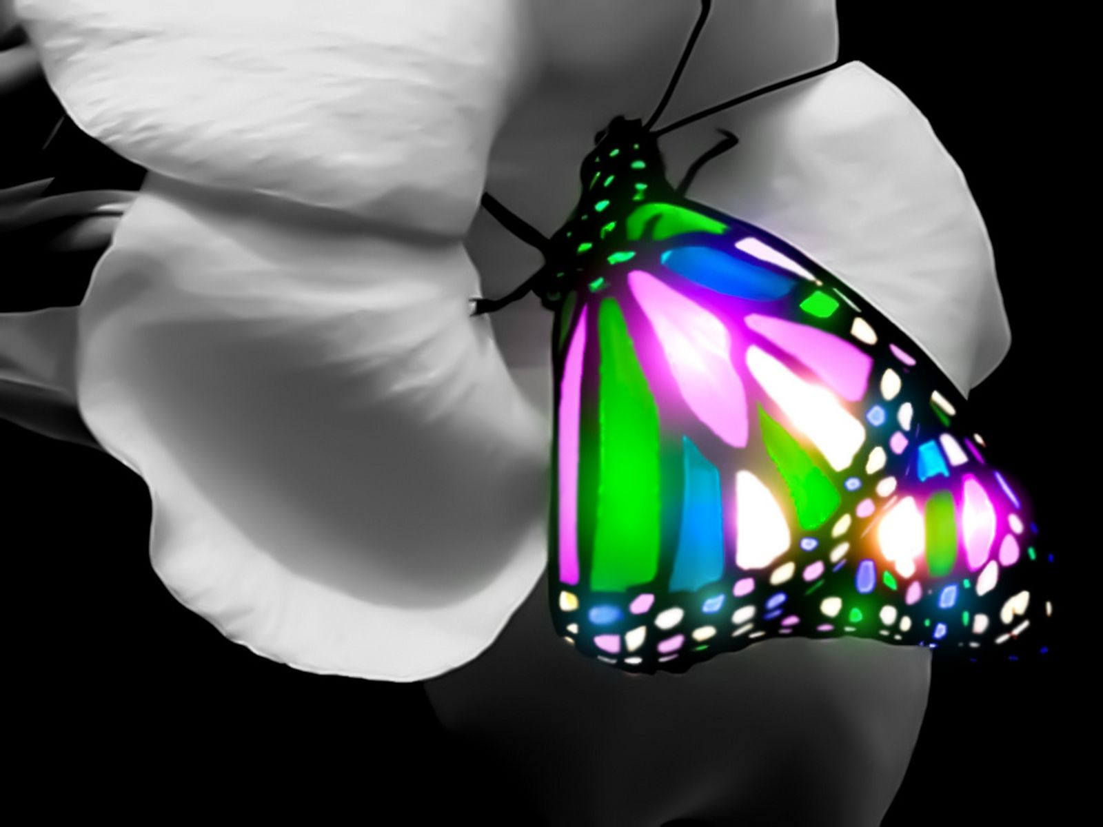 3d Butterfly Wallpaper Butterfly Wallpaper Butterfly Photos Butterfly