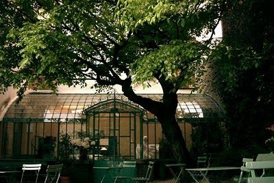 "An ""orangerie"" in my courtyard"