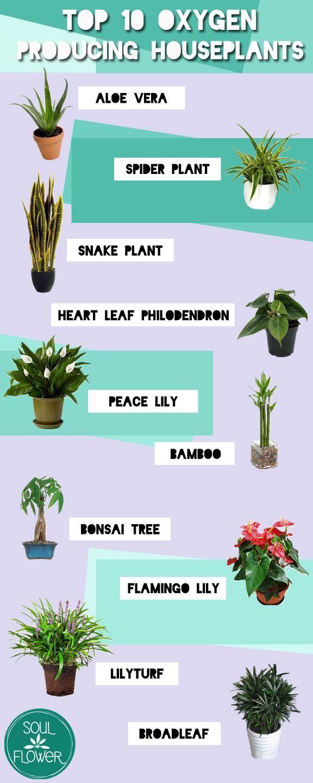 Top 10 Oxygen Producing Houseplants | Plants Best indoor ...