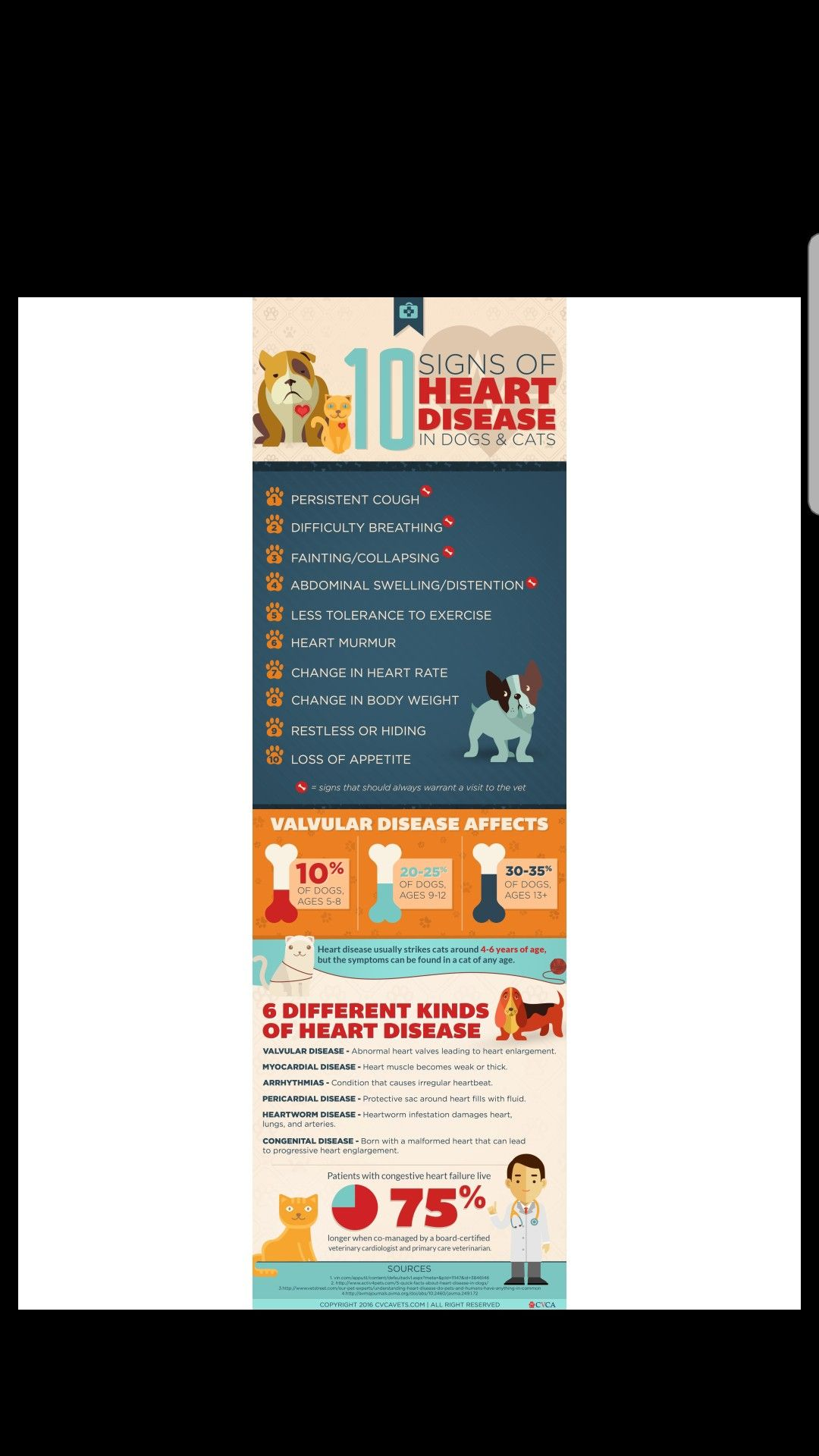 Pin by Pecan Grove Veterinary Hospital on Dog Signs of