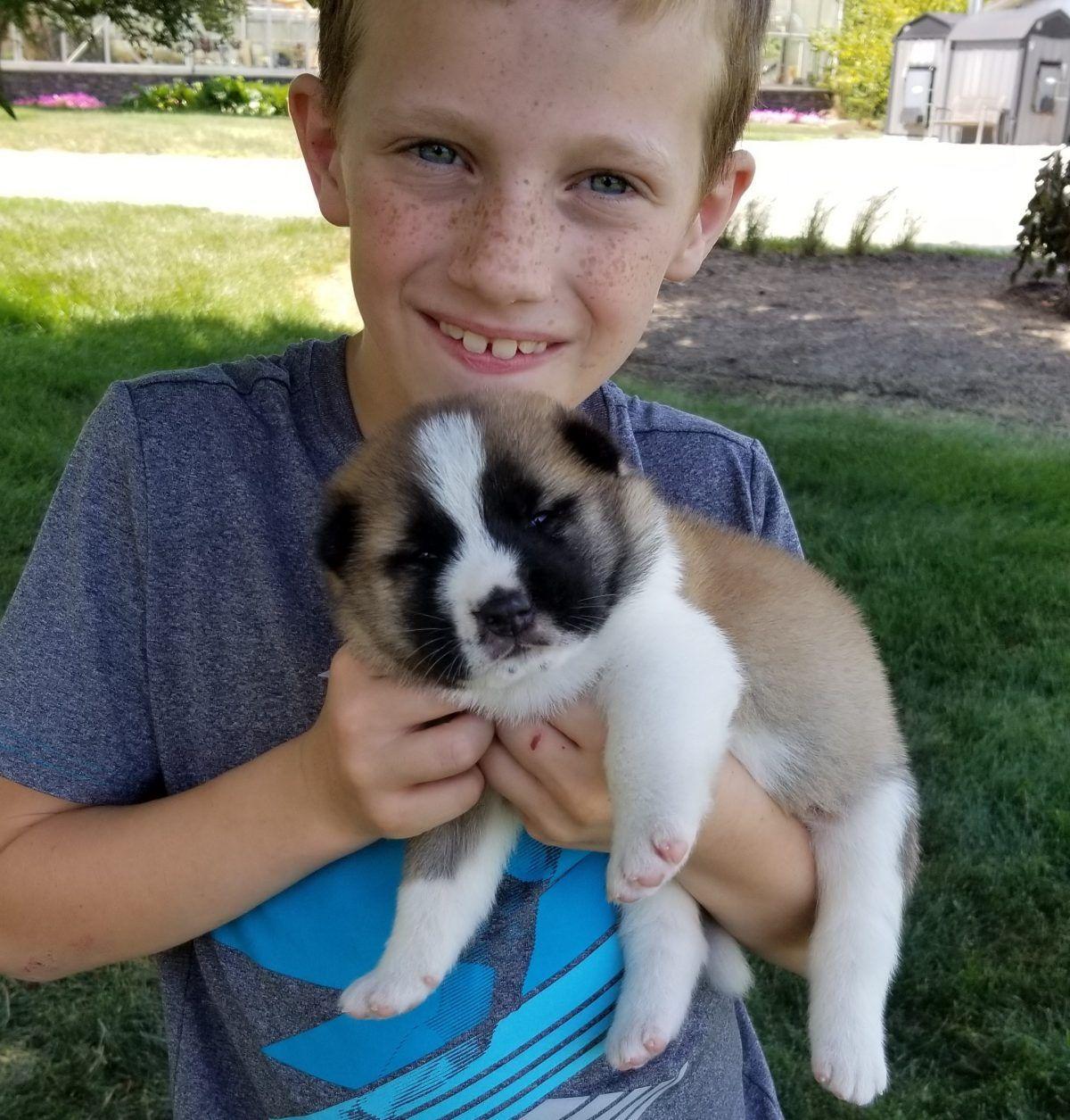 Cloe Female Doggie Mini Goldendoodle For Sale In Saint Cloud