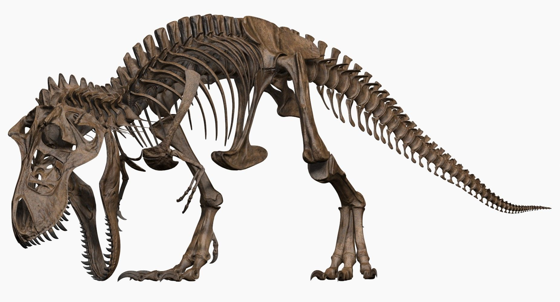 Joseclemente Trex skeleton T rex
